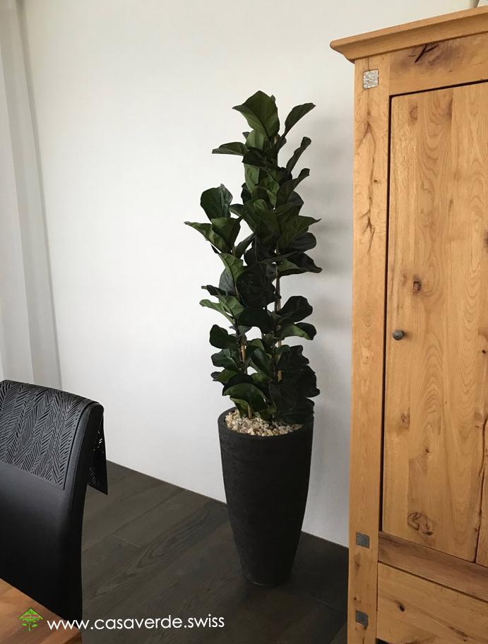 Casa Verde Innen + Aussenbegrünung AG - Innenbegrünungen